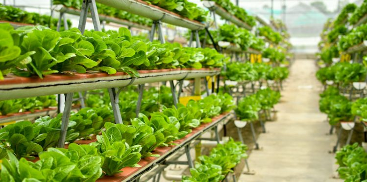Close-up picture of a vertical farm