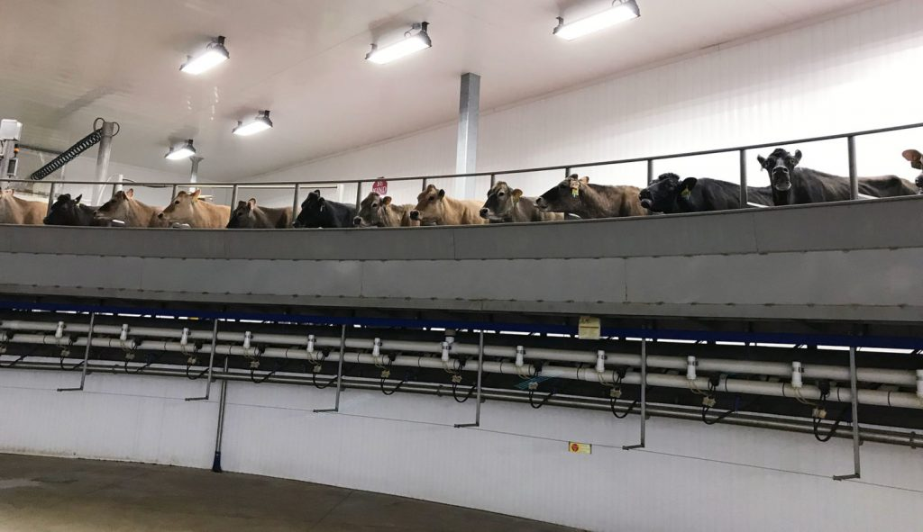 Quickliner PVC Wall Panels for Agriculture